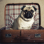Pooch Package at St Pancras Renaissance Hotel in London