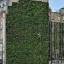 Living Wall at The Rubens at the Palace London